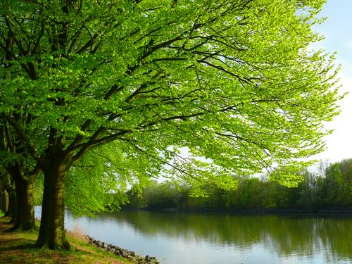 treeriver