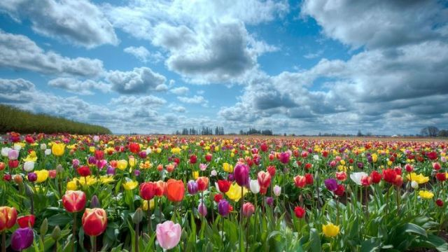 floweringfield