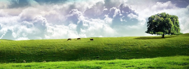 green-pasture-widescreen-wallpaper-v2