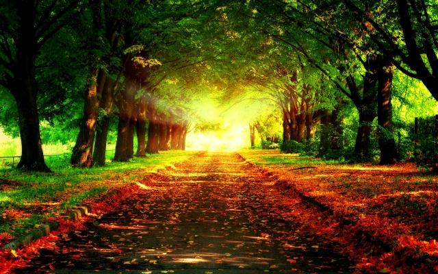 pathway-wallpaper-2