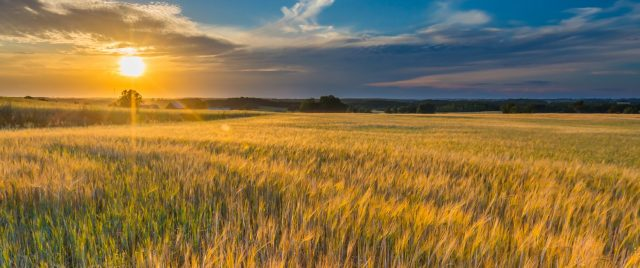 background_wheatfields-1500x630