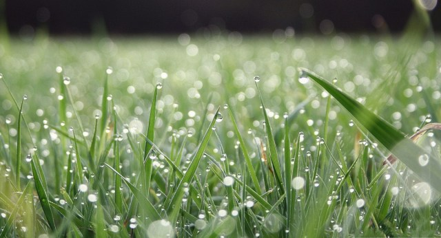 rainongrass