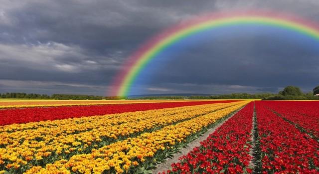 colorsinfield
