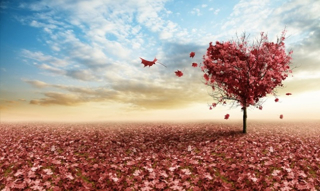 heart-shaped-tree-with-red-leaves-small