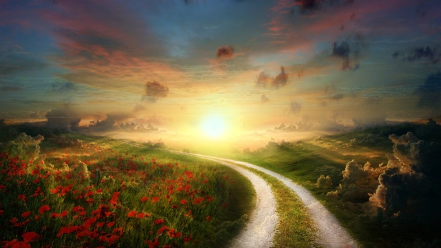 sun_poppy_path_landscape-hd