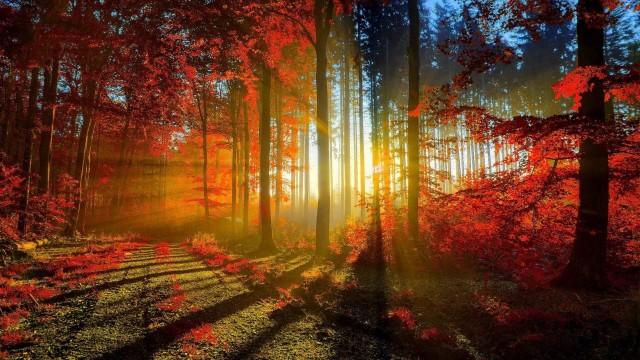 Cool Forest Landscapes Fun Excelent Nature Trees Desktop Wallpaper Forests