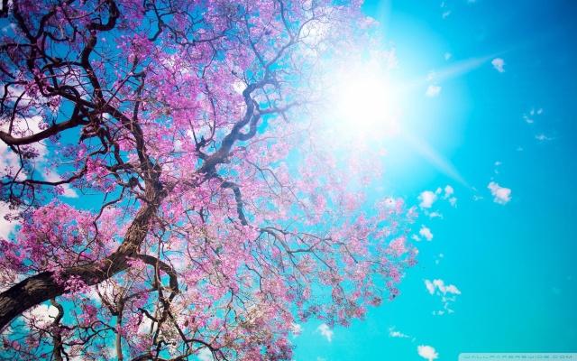 pinktree