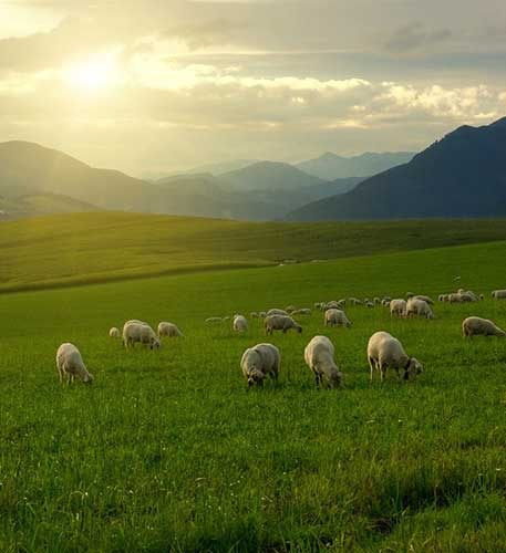 Wait-for-Him-in-Green-Pastures