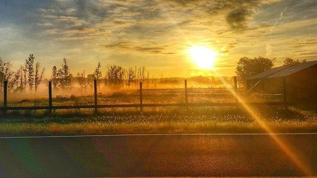 sunrisefarm
