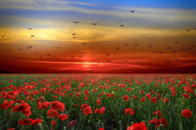 landscape-redflowers